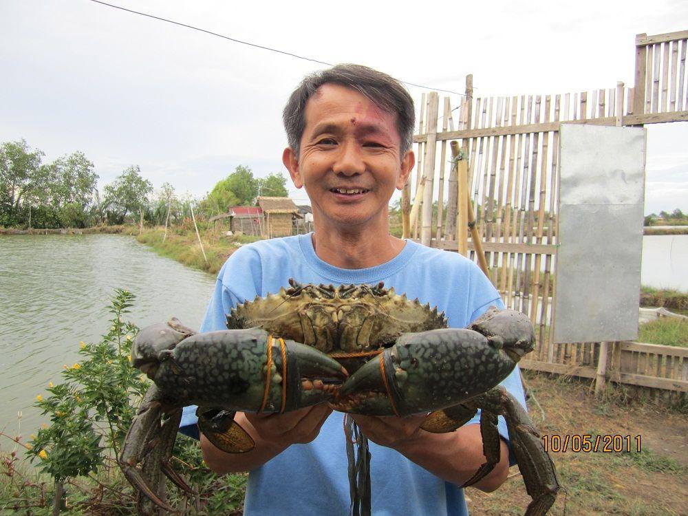 king mud crab
