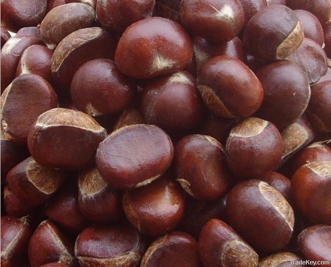 2011 fresh chestnuts