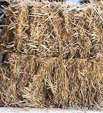 Hay; Boma Rhodes Grass, Wheat Straws, Barley Straws, Baler Twines