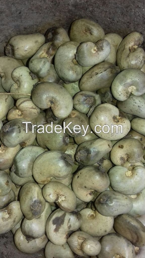 Cote D'Ivoire Origin Raw Cashew Nuts 2019 New Crop