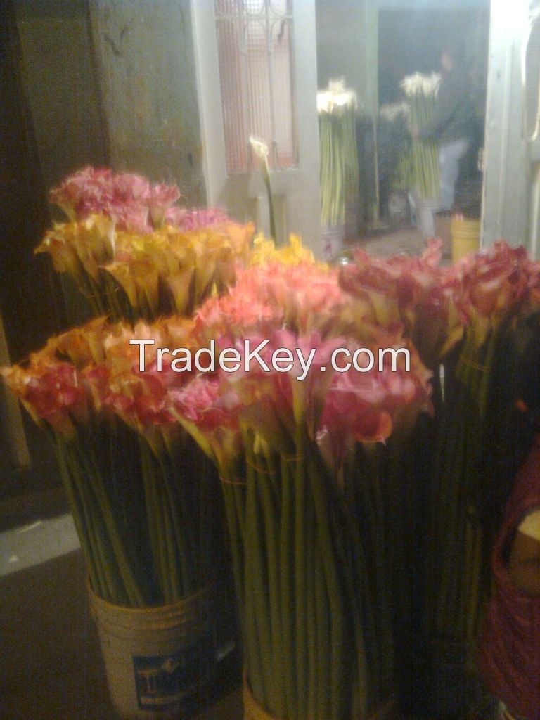 Fresh Cut Flowers Direct From Farms in Colombia and Ecuador