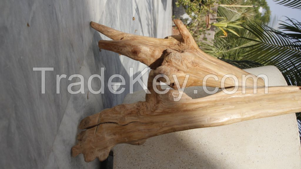 INDIAN WHITE SANDAL WOOD
