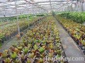 Greenhouse Polyethylene Film