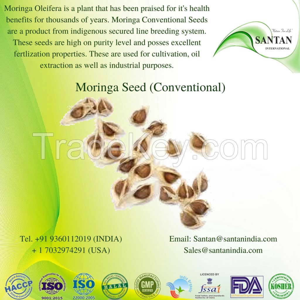 Morninga seed conventional