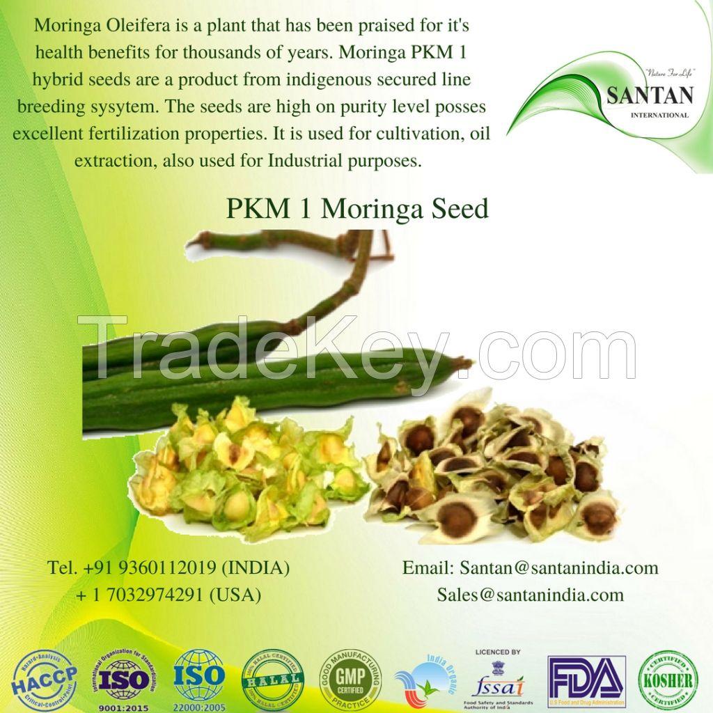 Morninga Seed - PKM1
