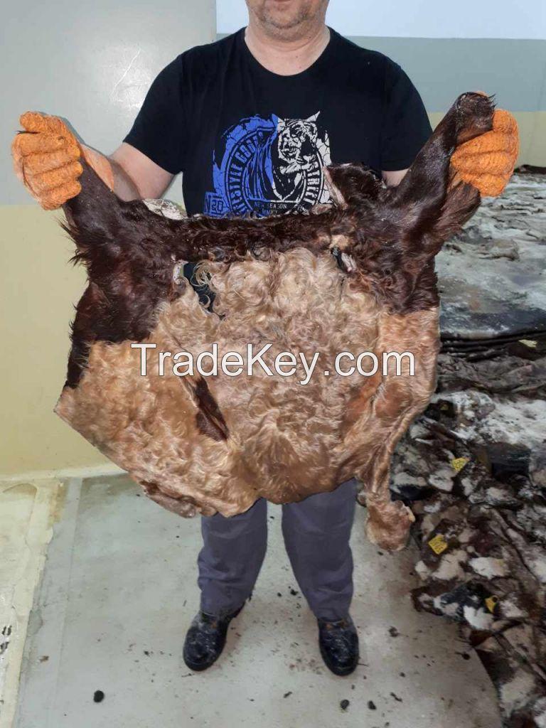Wet salted cow head skin Europe origin