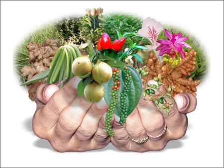 SPICES , SEASONINGSGARAM TANDOORILENTILS, PULSES RICE PACKAGED FOODS,