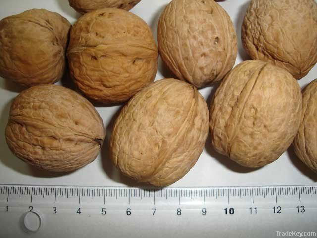Cheap Walnut | Wholesale Walnut | Discounted Walnut | Bulk Walnut | Walnut Suppliers | Walnut Exporters | Walnut Manufacturers | Walnut Buyer | Import Walnut