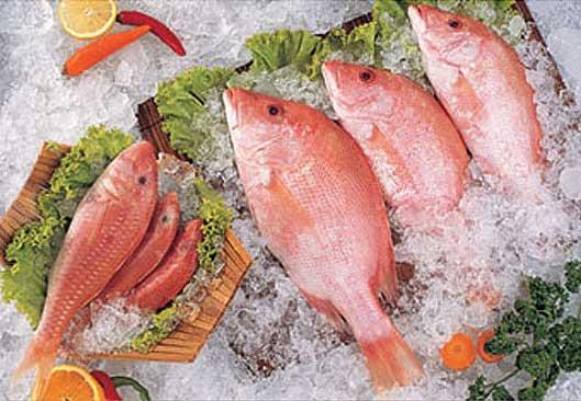 Seawater Fish