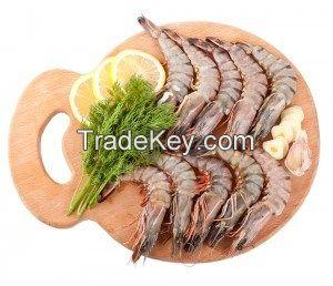 Seawater Shrimp