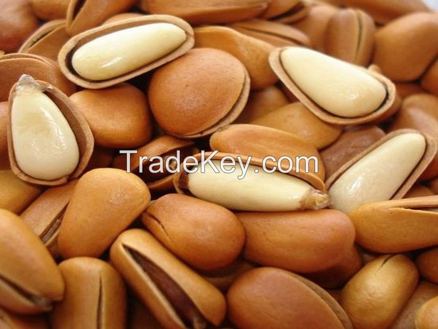 pine nuts,east china pine nuts,nature pine nuts