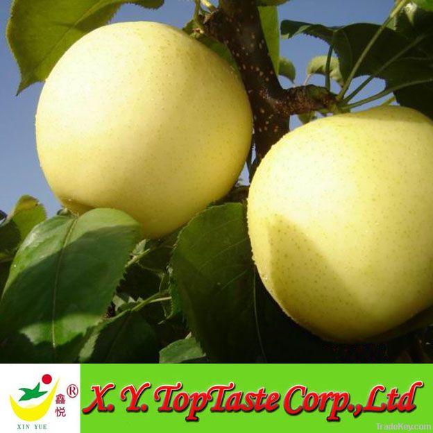 Fresh Crown Pears