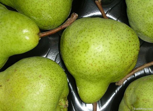 Fresh Peck-ham Pears