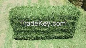 Grade A Primium Green Alfalfa Hay