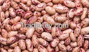 White, red speckled sugar beans kidney beans