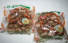Beech mushroom/shimeji