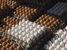 Fresh Table and Broiler Eggs