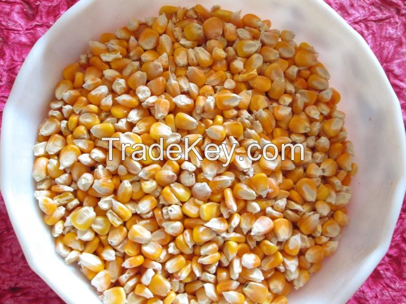 Corn for animal feed