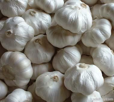 Fresh Garlic and Ginger (Normal & Pure White)