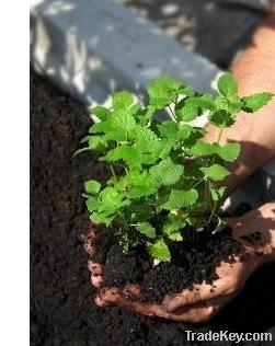 Compost, Vermicompost, Biohumus