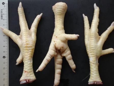 Export Chicken Paw | Chicken Feet Suppliers | Poultry Feet Exporters | Chicken Feets Traders | Processed Chicken Paw Buyers | Frozen Poultry Paw Wholesalers | Low Price Freeze Chicken Paw | Best Buy Chicken Paw | Buy Chicken Paw | Import Chicken Paw | Chi
