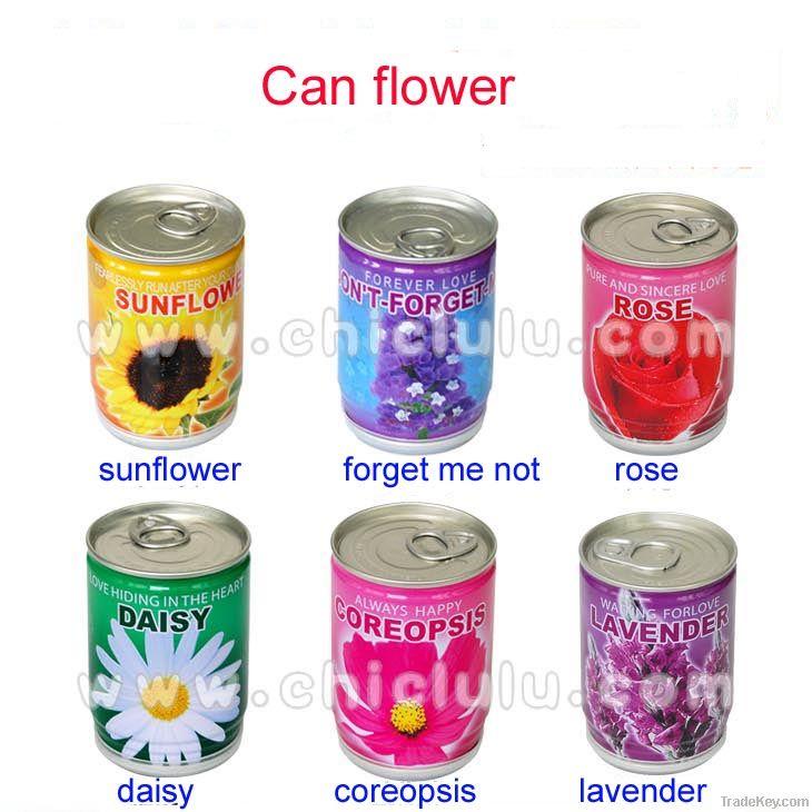 mini can flower