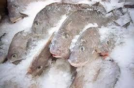 Frozen Fish ( Tuna, mackerel and others ).
