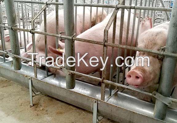 Animal Gestation Crate