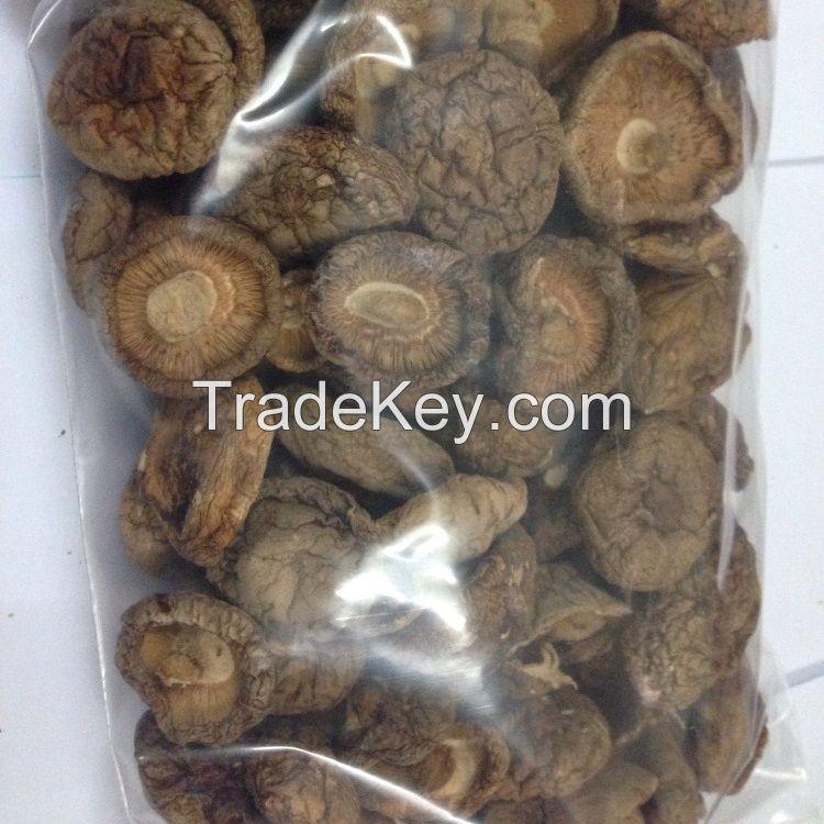 bulk wild natural fresh  whole meaty thick dried mushroom