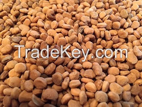 1000 American Ginseng Seeds-Stratified 2021 Ready to Plant Now