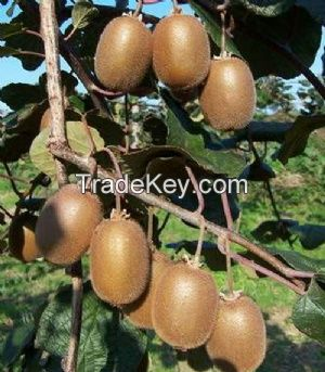 Organic Fresh Kiwi