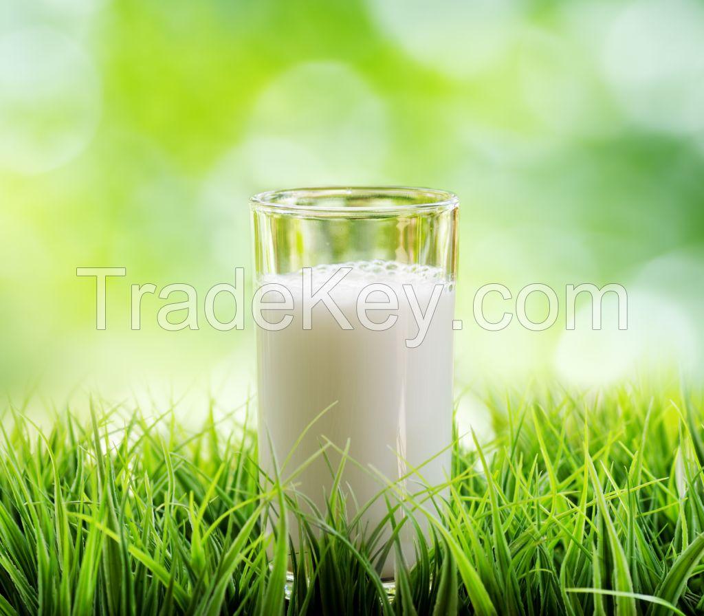 Premium European UHT Milk for export