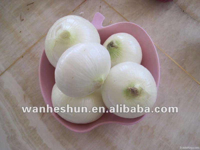 Fresh peeled white onion of 2012