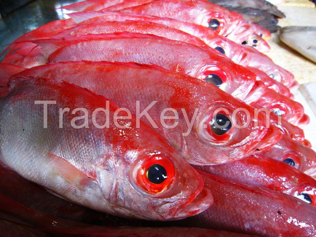 Frozen Tongue Sole, Cuttle Fish, Ribbon, Yellow Crocker, Pomfret, and Sea Shrimps.