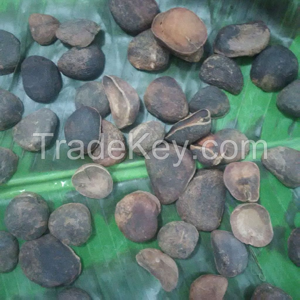 KOLA NUT (POWDER)