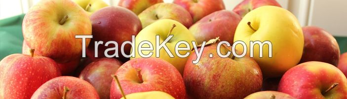 Fresh Fruits  Apples Avocados Bananas Cherries Citrus Fruit Coconuts G