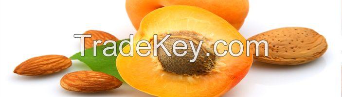 Nuts  Almonds Apricot Kernels Brazil Nuts Chest Nuts Hazel Nuts Macada