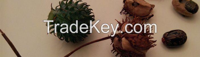 Castor Seeds Cotton Seeds Hemp Seeds Flax Seeds Jatropha Seeds Perilla