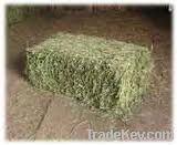 Horse Feed Hay