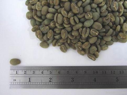 Arabica kalosi toraja green coffee beans