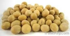100% pure and best Soybeans with competitive price
