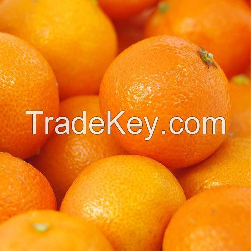 Premium fresh oranges or Fresh citrus fruits for export, ready to load to any destination