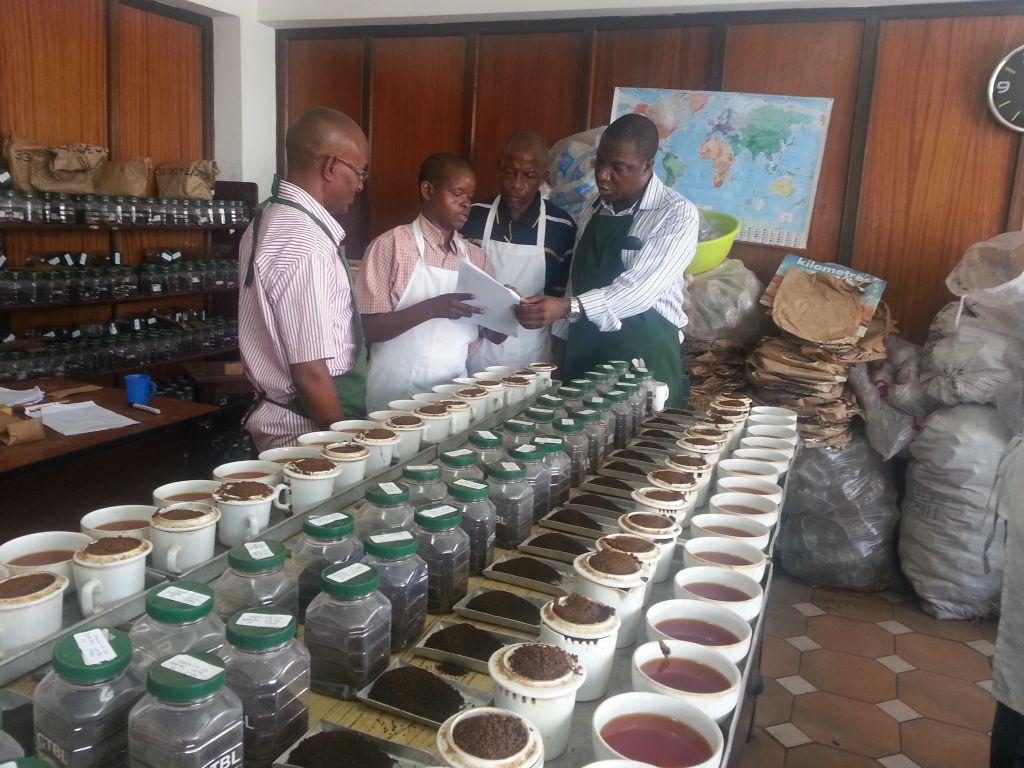 Kenya ctc black tea  grade A