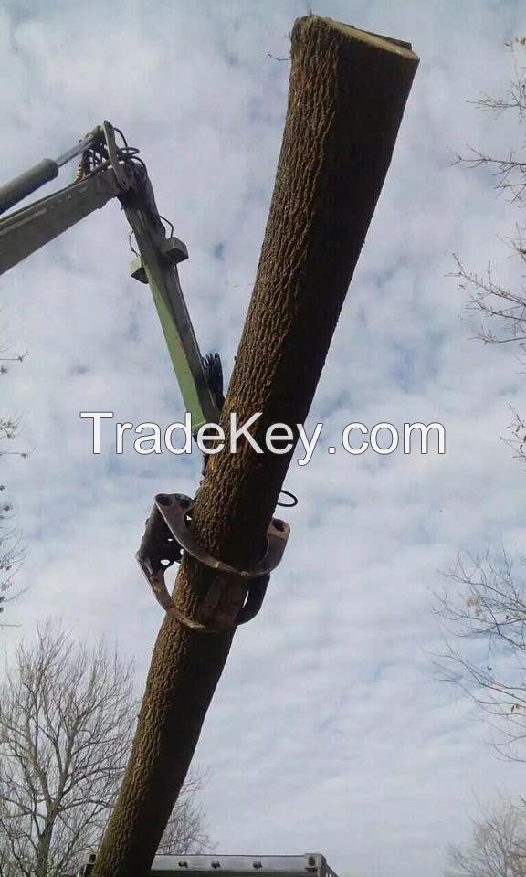 We offer Radiata Pine Logs 18+ cm