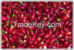 miracle fruit berries