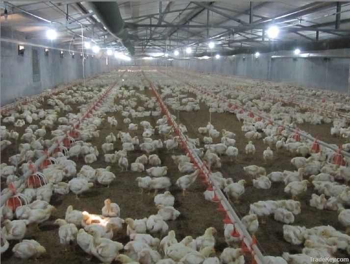 Automatic Poultry Farm Equipment