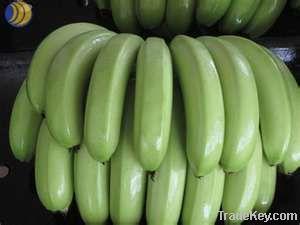 Premium Quality Fresh Cavendish Banana