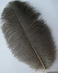 Natural ostrich feather