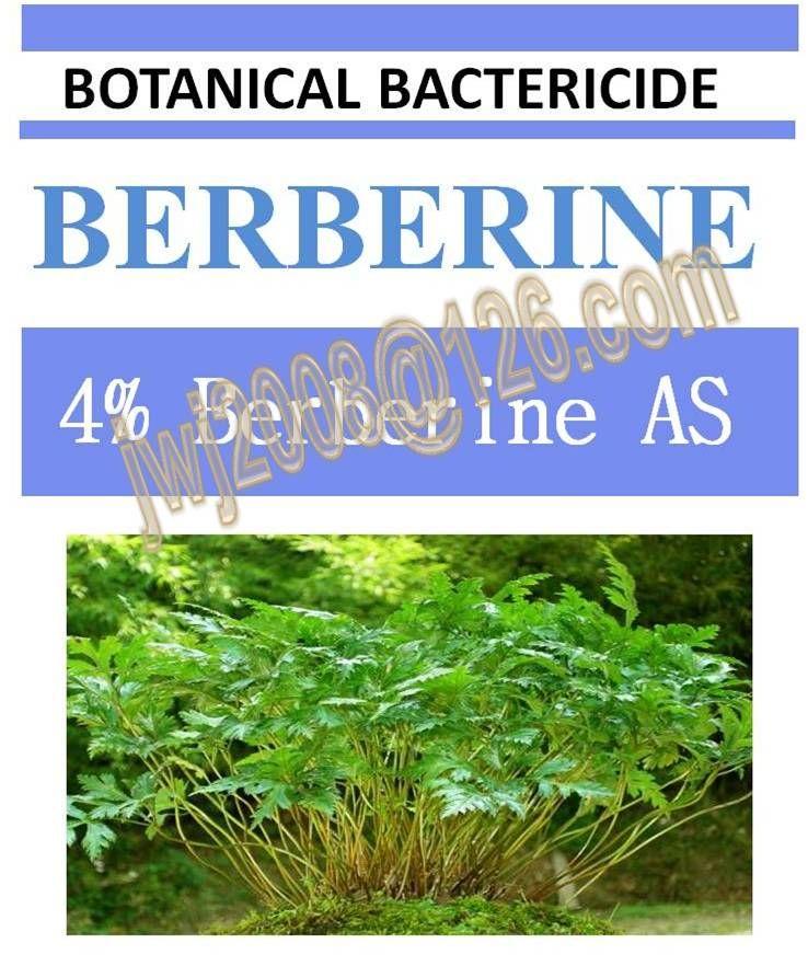 4% Berberine AS