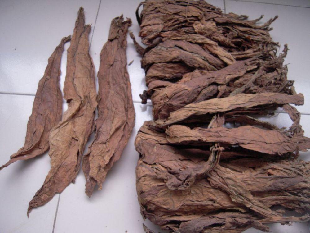 Tobacco leaf Raw air cured or machine processed shredded